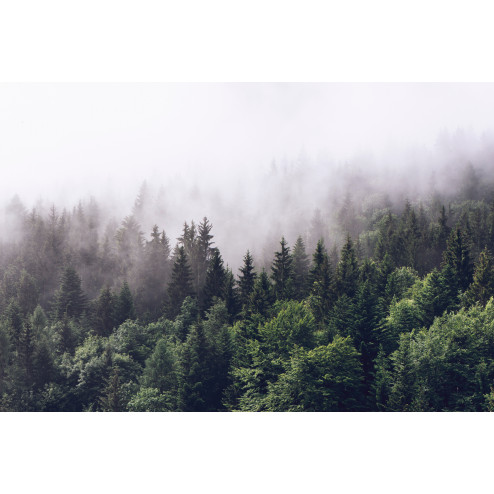 Foggy Pines - Sample Kit