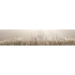 Grass field with spider webs