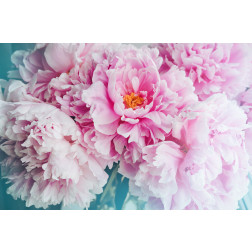 Peony Bliss - Sample Kit