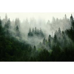 Misty Firs - Sample Kit
